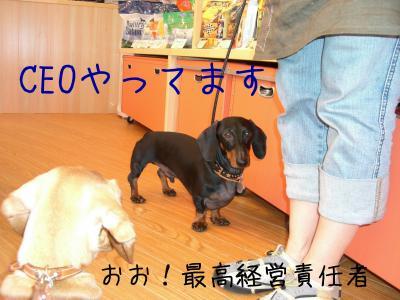 CIMG1005_sh01_convert_20081223121520.jpg