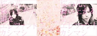 エレファントカシカシ~桜の花、舞い上がる道を