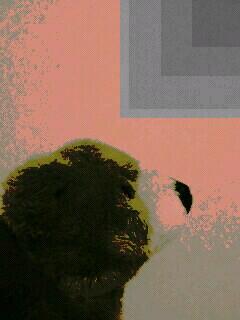 クマのぬいぐるみ携帯画像