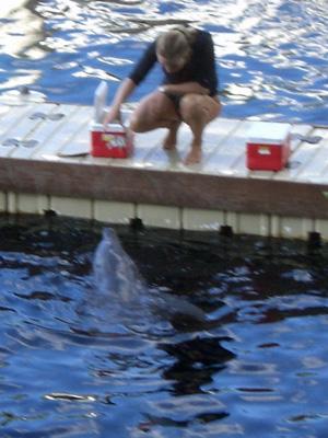 080910イルカのプール2