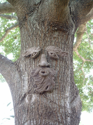 Old Man Winter Tree Face