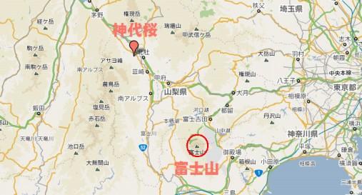 神代桜MP