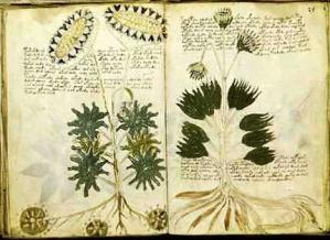 Voynich Manuscript04