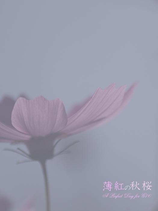 IMG_0870_2.jpg