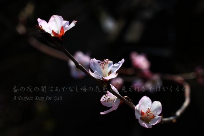 IMG_3454_2_1.jpg