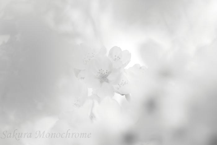 IMG_5069_mono_w.jpg