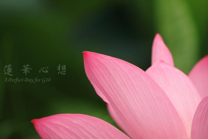 IMG_9396.jpg