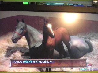 特殊馬の子普通キタ━━(゚∀゚)━━ヨ!