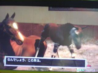 ナンでしょう…この馬は…Σ(ノ∀`w)