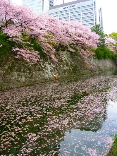 駿府城のお堀です