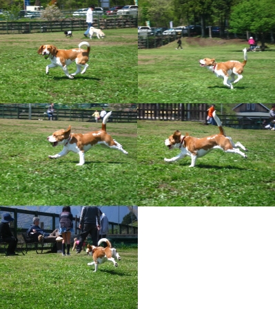飛行犬失敗