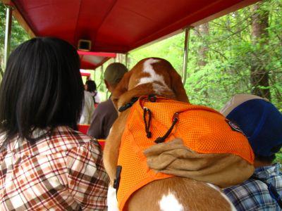 電車に犬も乗れます。