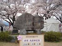 山梨桜11