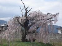 木崎湖旅行記4月編14