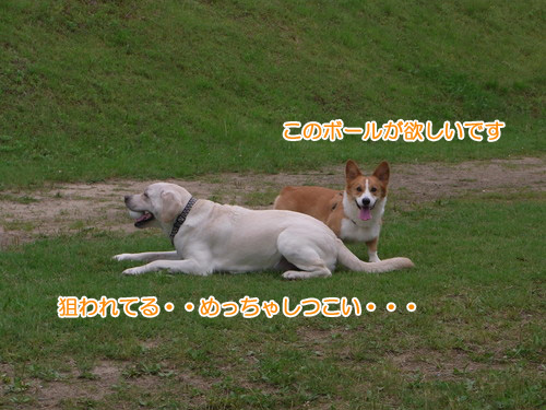 RIMG3214.jpg