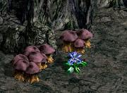 ヘソパルの花