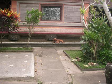 王宮の犬01