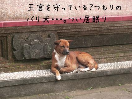 王宮の犬03
