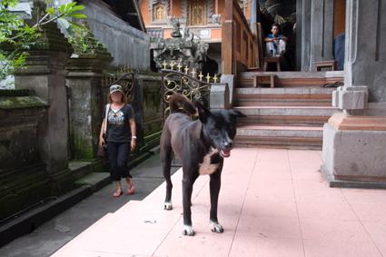 王宮の犬04