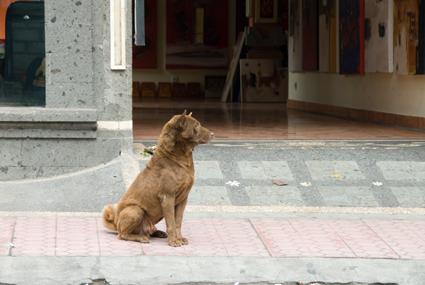 姿勢がいい犬