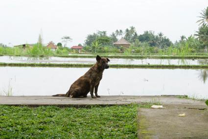石けん工場の犬
