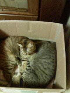ダンボールで眠る2匹