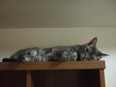 そこに、猫2