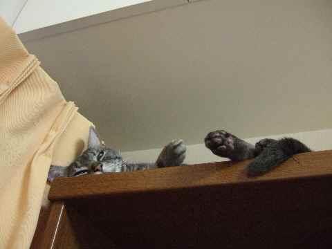 本棚で寝てます