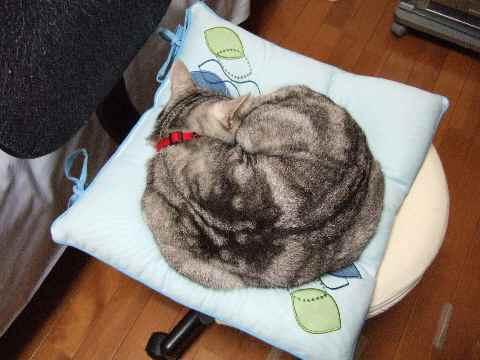 椅子で寝るレン