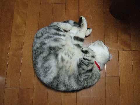 床暖大好き1