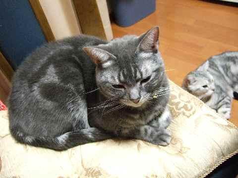 犯猫その1