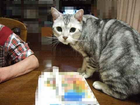 こんな顔のお猫様
