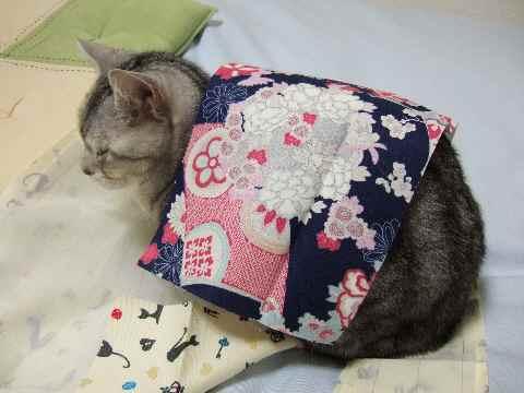 お邪魔猫4
