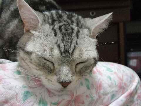 本猫はシアワセ