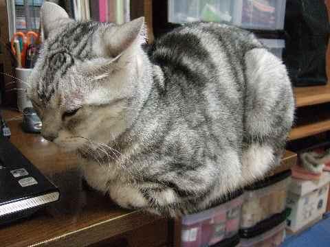 お邪魔猫2