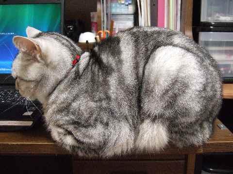 お邪魔猫1