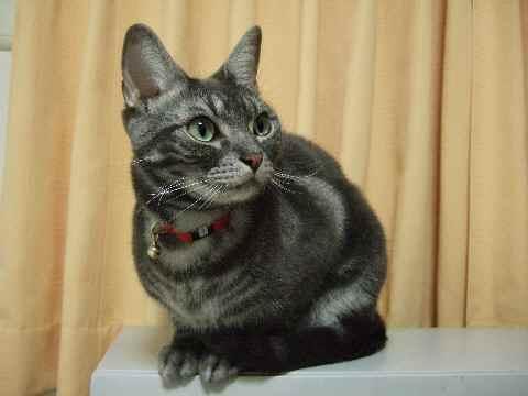 猫の目は……