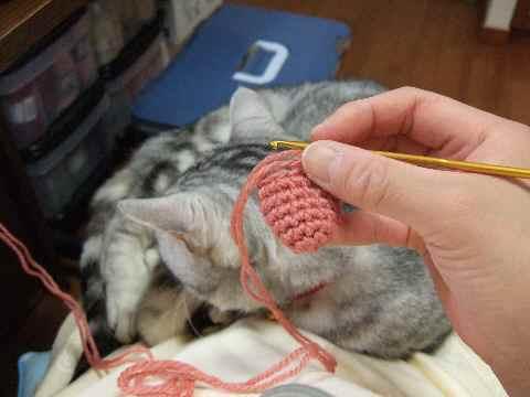 編み物中3