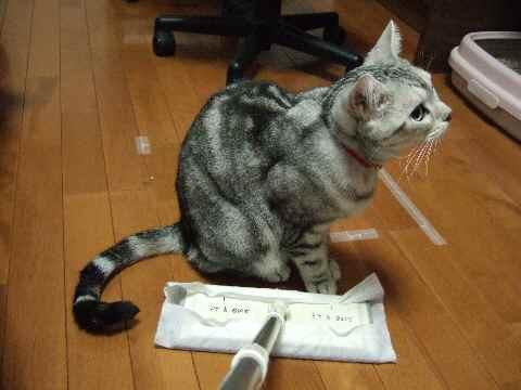 不動の猫2