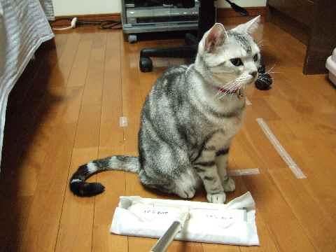 不動の猫3