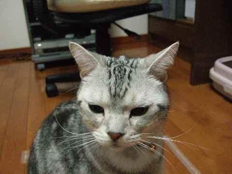 不動の猫5
