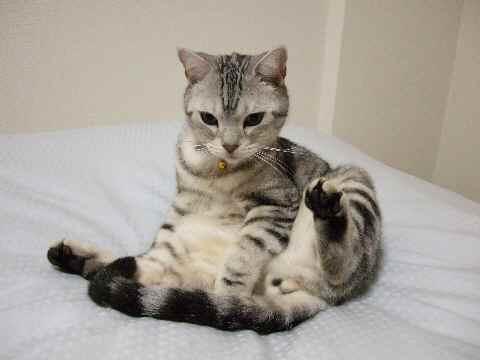 フリーズ猫
