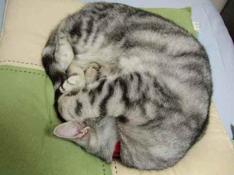 寝てるレン3