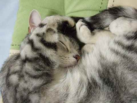 寝てるレン6