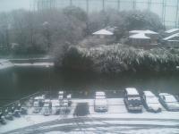 snowsnowsnow.jpg