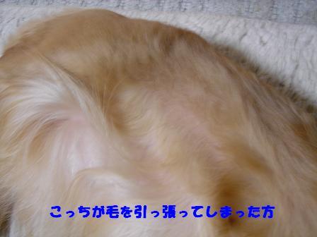 DSC05925-1.jpg
