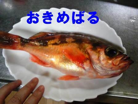 Image0961-1.jpg