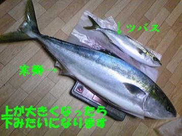 SBSH0359-1.jpg