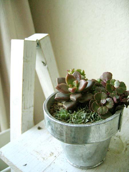 アルミ鉢、多肉の寄せ植え