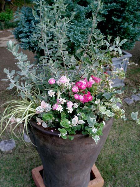 バラの寄せ植え3